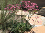 plant of the month - June 2016
